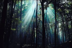 Finding your inspiration through a forest of challenges