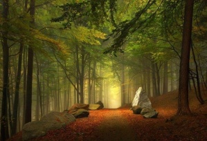 """Enchanted Forest, Bavaria, Germany from YourAmazingPlaces.com"